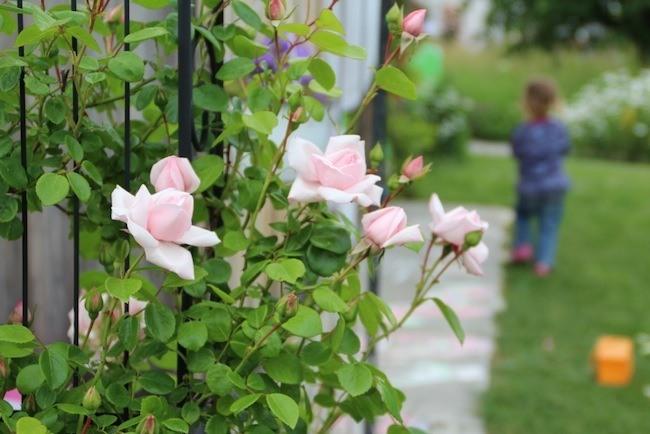 Kinder richtig erziehen - Wie sollten Belohnung oder Lob sein